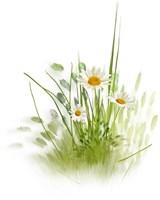 Травы ручного сбора