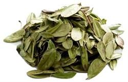 Брусники листья - фото 4760
