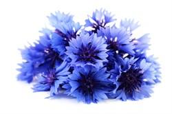Василек синий, цветы - фото 5196