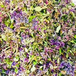 Душица, цветы (Башкирия) - фото 5692