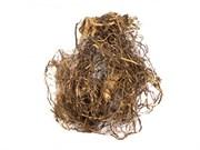 Левзея сафлоровидная - маралий корень